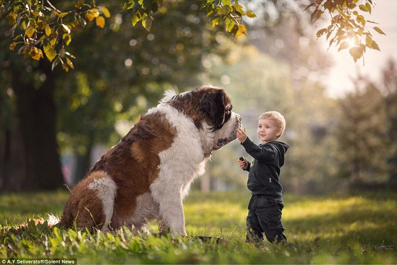 Saint Bernard price & cost range. Where to buy Saint Bernard puppies?