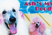 Ash's Mystical Poodles - Breeder in Nevada. Poodle puppies for sale in Ash's Mystical
