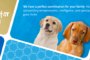 EveningStar Kennels – Golden Retriever breeder in California. Puppies for sale in EveningStar