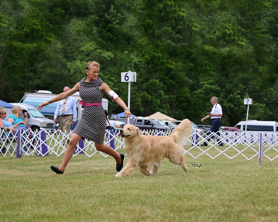 Gold-Rush Golden Retrievers - Breeder in New Jersey. Puppies for sale in Gold-Rush kennel