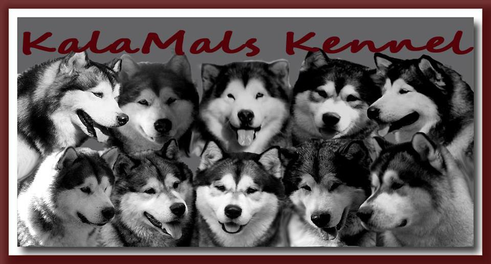 KalaMals - Alaskan Malamute breeder in Virginia. Malamutes for sale in KalaMals