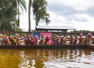 Turbo Retrievers kennel - Breeder in Land O Lakes, Florida
