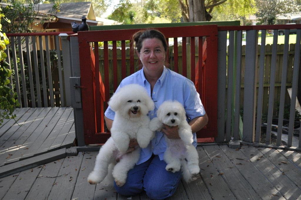 Cambeas Puppies kennels - Bichon Frise Breeder in Clearwater, Florida