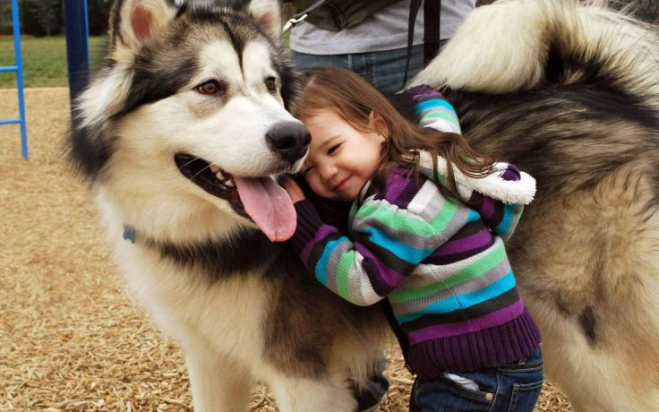 Alaskan Malamute price range. How much is an alaskan malamute puppy