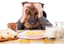 Best dog food for German Shepherd. German Shepherd diet & food list
