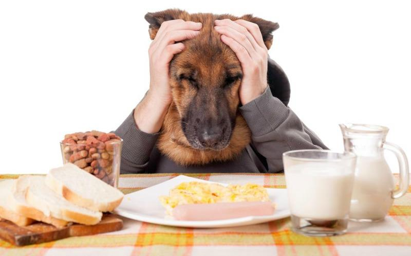 Best Dog Food For Picky Dogs