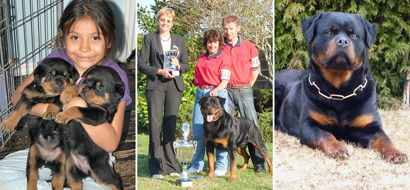 Von Evman Rottweilers kennel, Florida. Rottweiler puppies for sale in Von Evman kennel