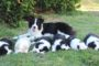Bellaclan Border Collies kennel – Breeder in Ontario (Canada)