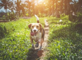 7 Sneaky Ways Fleas and Ticks Can Invade Your Pets Bodies