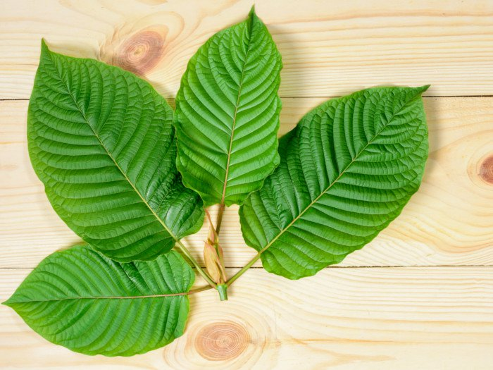CAN WE GIVE KRATOM TO PETS - A FULL GUIDE