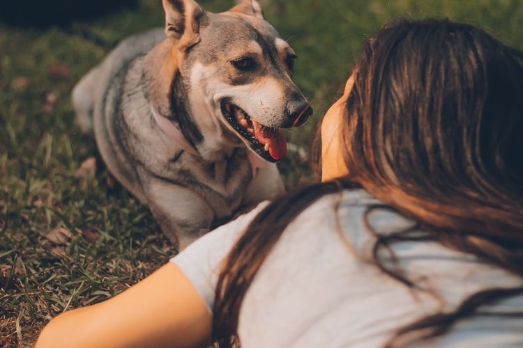How to Find the Best CBD il for Your Pet