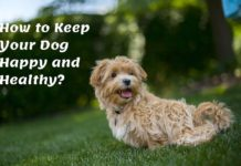How to Keep Your Dog Happy and Healthy?