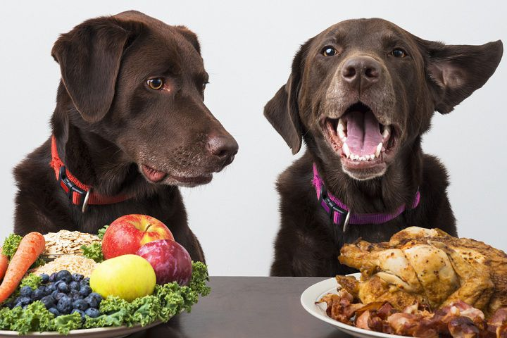 Improve Your Dog's Diet in 10 Simple Steps