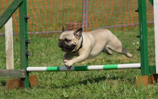 Why You Need to Sign Up For Online Dog Training Courses