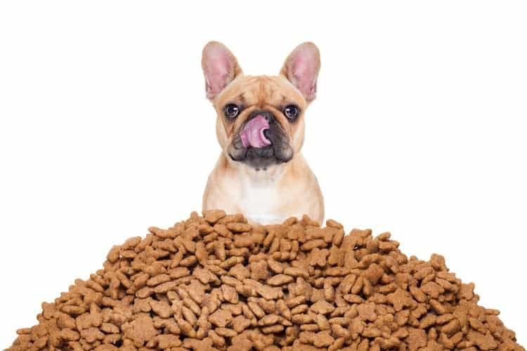 How Much Should I Feed My Dog? – Discuss the Amount