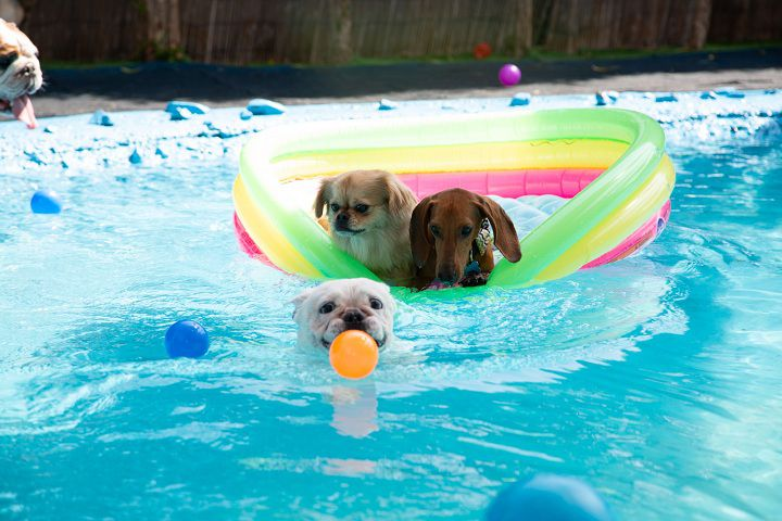 Pet Boarding in Dubai: Things to Know, Things to Consider, and Some Tips