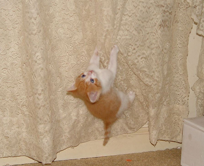 How to Stop Cats from Climbing on curtains?