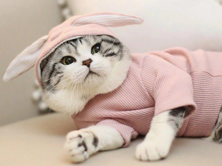 Winter Is Coming! Keep Your Kitty Safe with Cat Clothing and Other Items