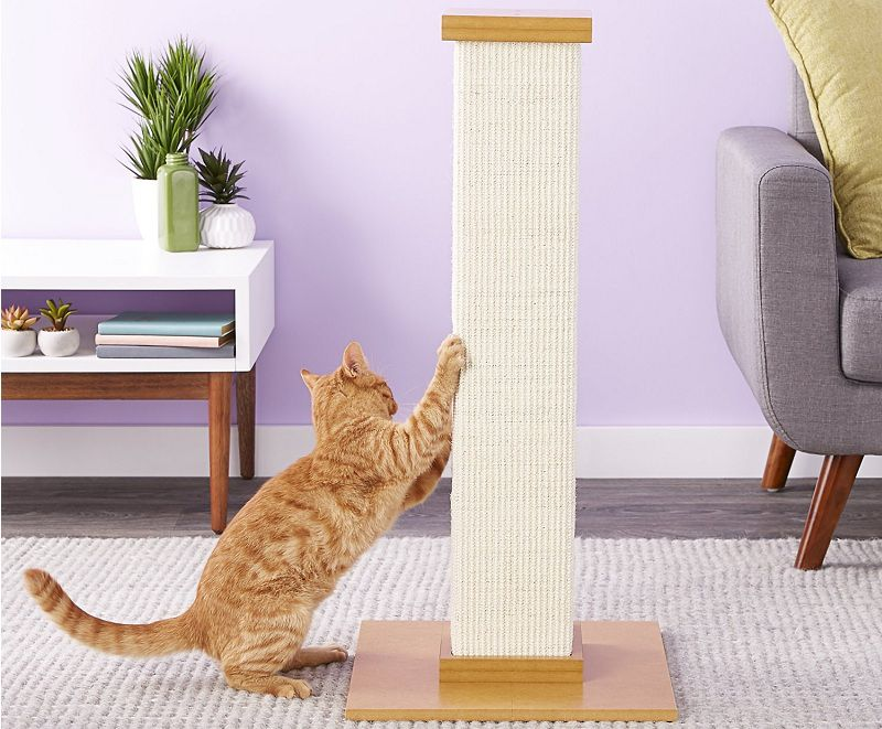 Best Cat Scratching Post to File Nails 2020 Reviews