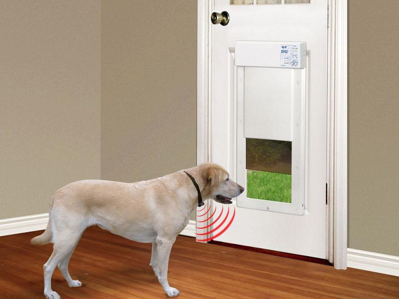 The Best Dog Door that Only Opens With Collar Reviews