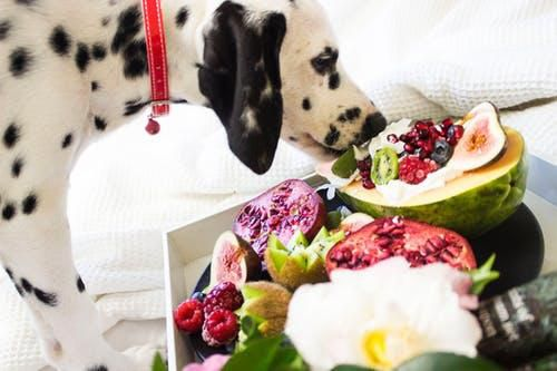 5 Important Things to Know Before Buying Dog Food