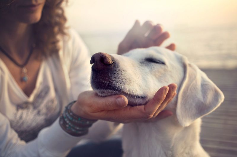 How Much CBD Oil Can I Give My Dog? A Guide to Dosage