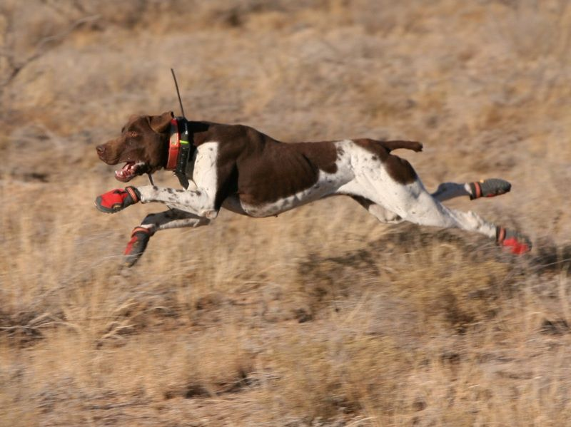 Best GPS Tracking Collars for Hunting Dogs Reviews