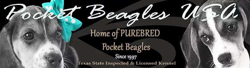 Pocket Beagles - Beagle Breeder in Quitman, Texas