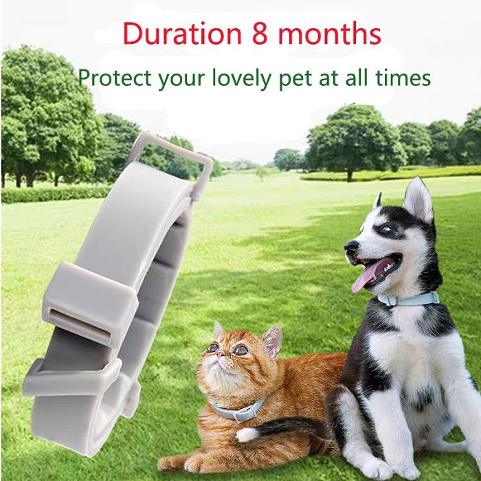 Are flea collars safe for cats & humans? The safest flea collar for cats