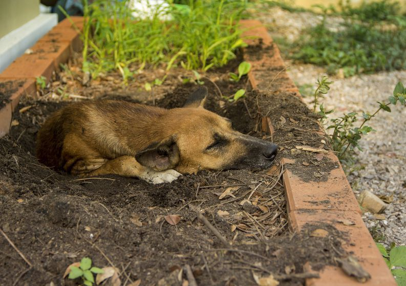 5 Reasons Why Dogs Like to Dig? What to Do About a Digging Dog?