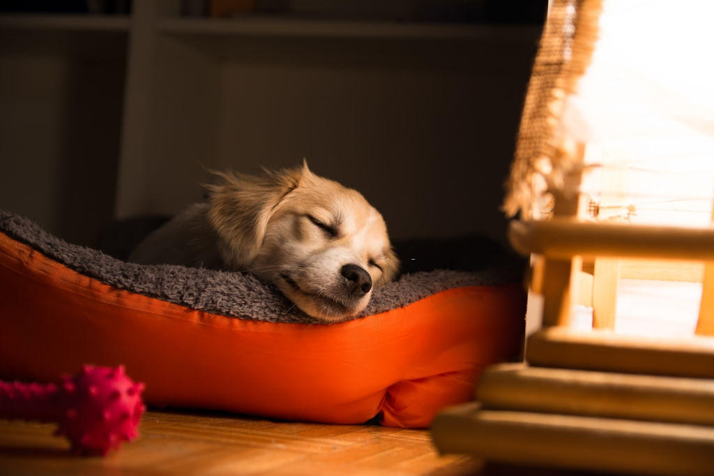 How to Keep a Dog Bed From Smelling