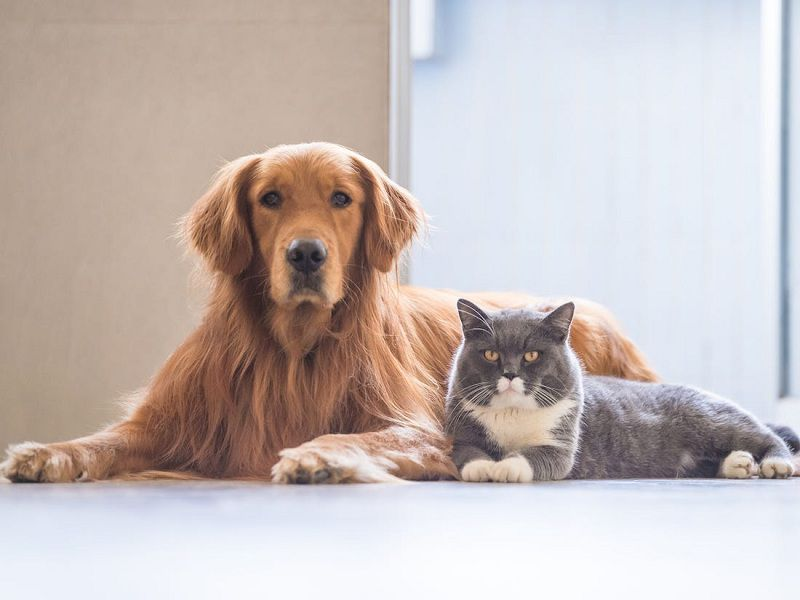 The Best Dog and Cat Breed for Your Family