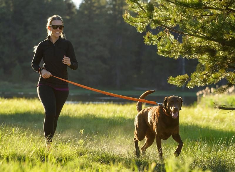 Dog Leash Types - What Should You Have?