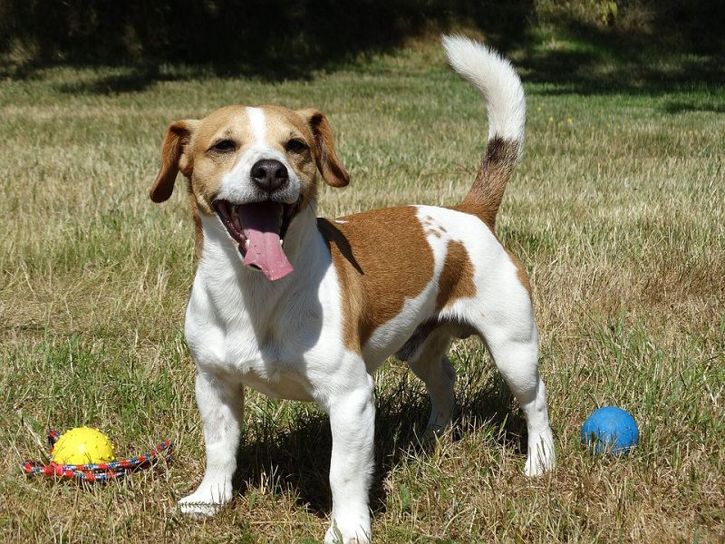 How Fast Can A Dog Run? Which dog breeds are the fastest?