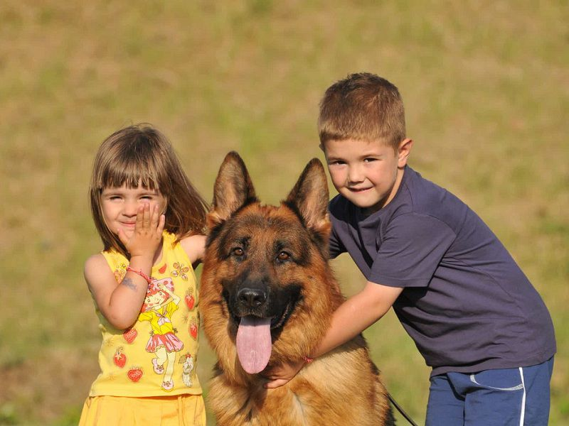 Is the German Shepherd a Good Family Dog?
