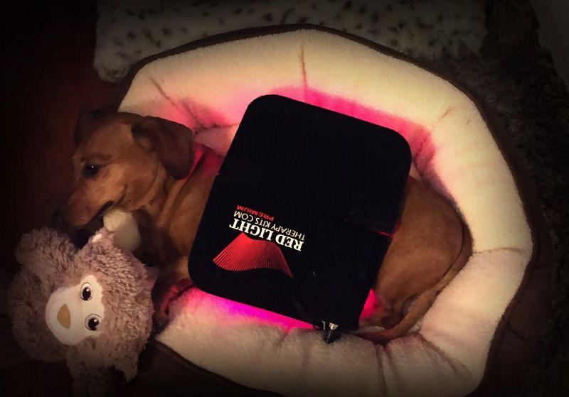 Light Therapy for Dogs? How Much Does Light Therapy for Dogs Cost?