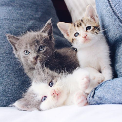 Top 5 Tips That Can Help Your Kitten This Spring!