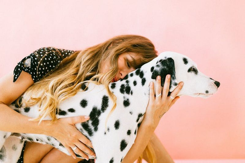 Workouts for Dogs: 7 Exercises to Help Your Pet Get in Shape