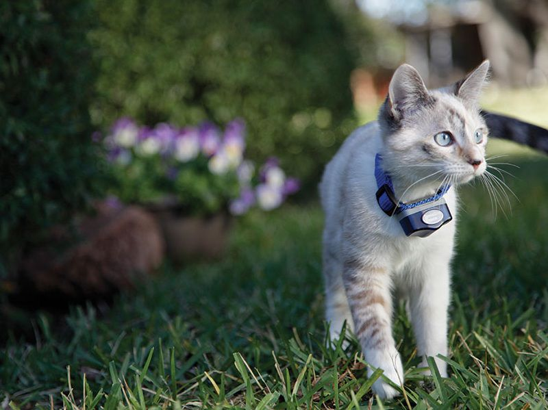 How to Keep an Outdoor Cat Safe