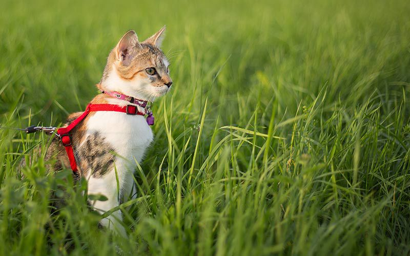 Should Your Indoor Cat Be Allowed Outdoors?