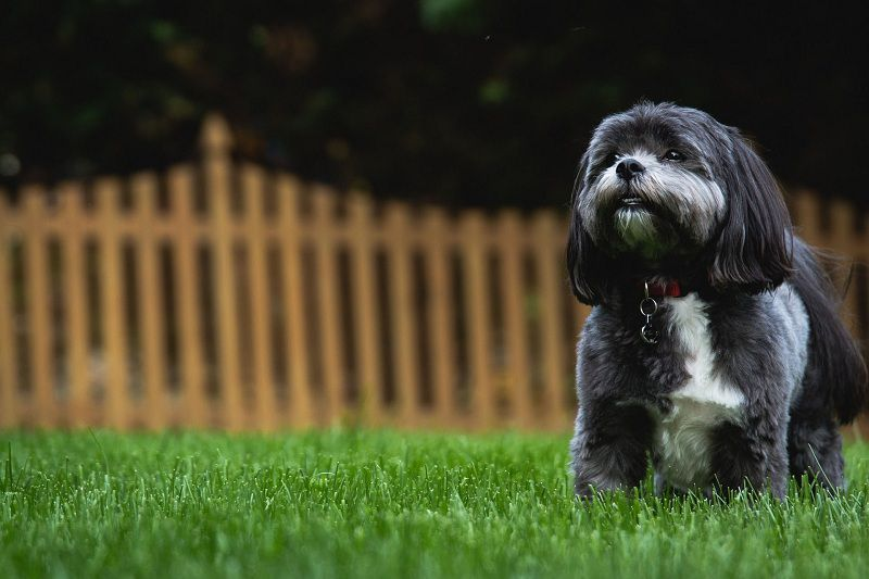 Top 5 ways to keep your dog safe in your backyard