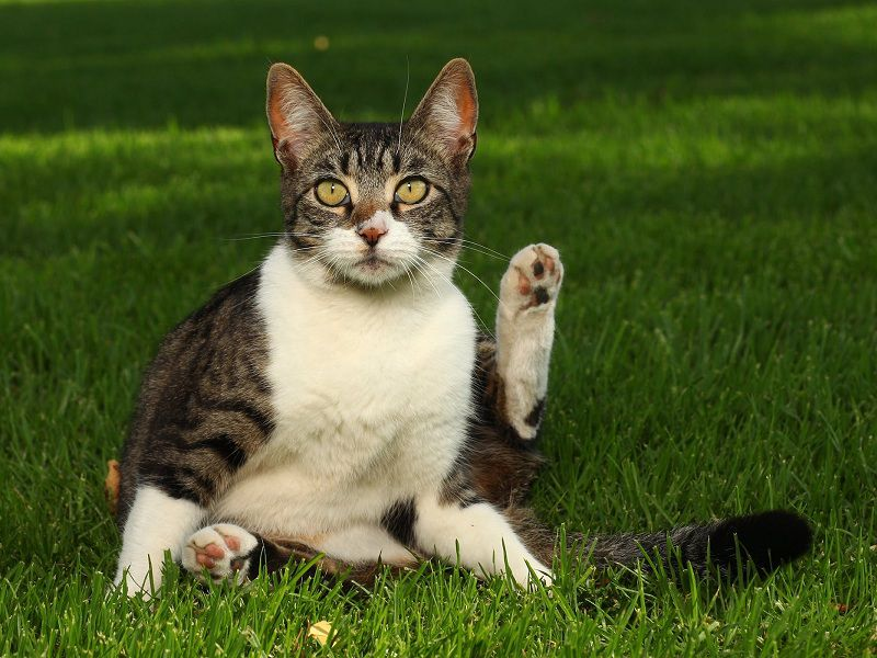 What Are The Side Effects Of Revolution For Cats?