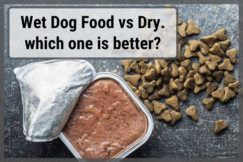 Wet Food vs Dry Food for Dogs: Which Is the Best for Your Pet?
