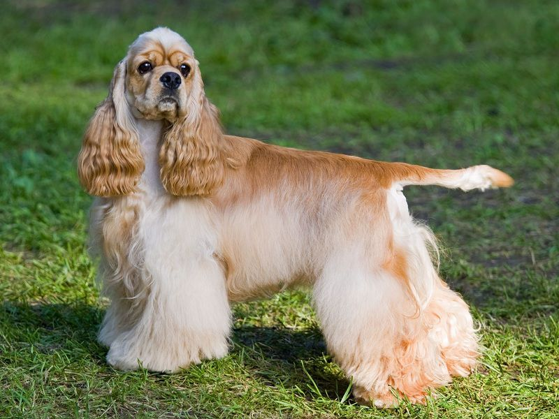 12 Budget-Friendly Dog Breeds. Best Budget Dog Breeds