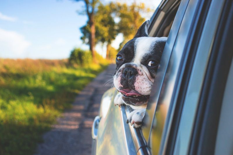 Adding a Pet to Your Family? Here is How You Can Accommodate Them