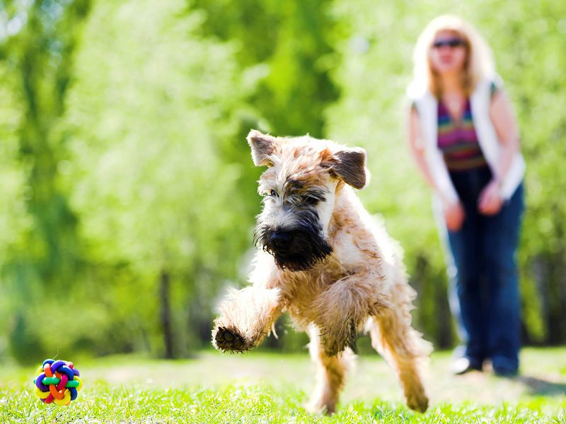 What Are The Most Popular Dog Breeds In London?