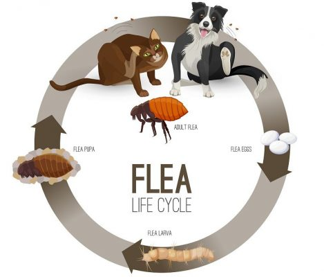 Pet Care 101: How To Avoid Fleas On Dogs