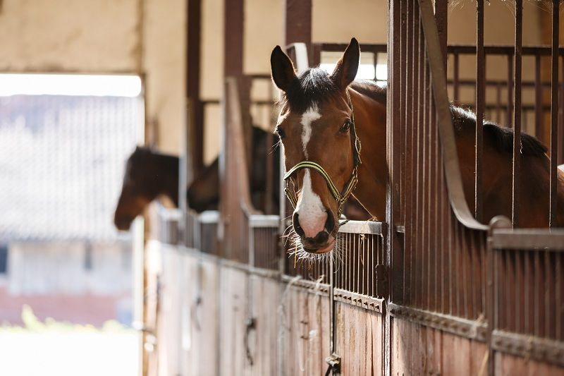 Stop Horsing Around!: The Pros and Cons of Owning a Horse