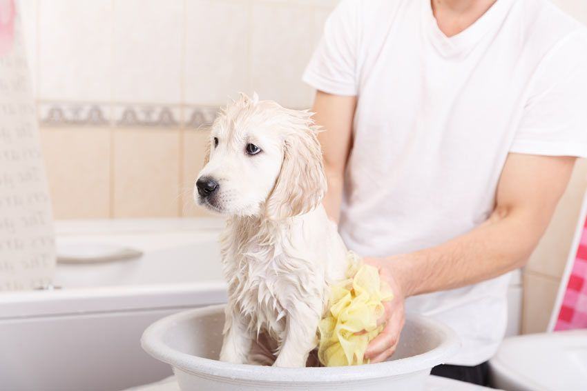 Things you should know for Giving a Great Bath to Your Dog