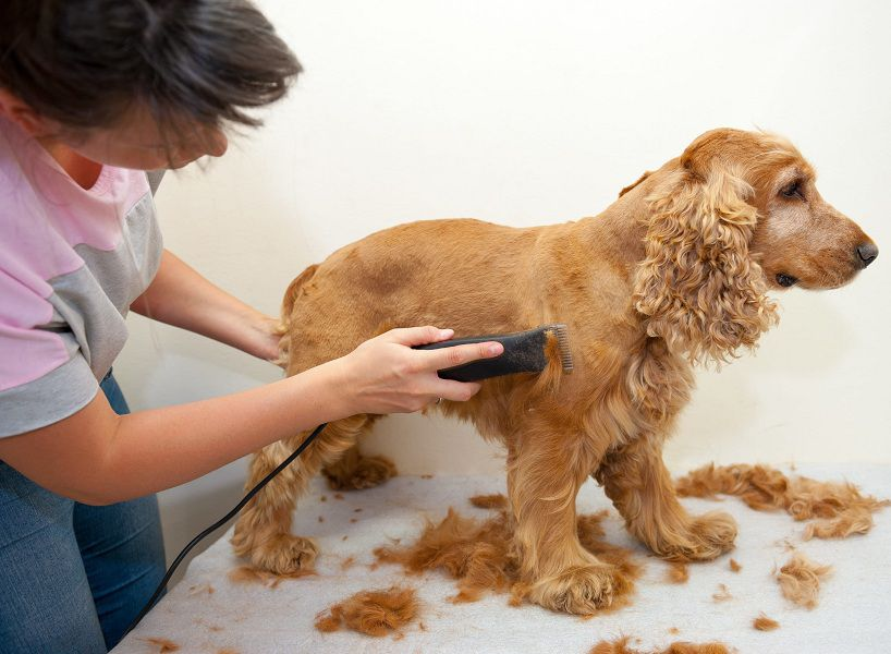 Top Guide How to Use Professional Dog Hair Grooming Clippers